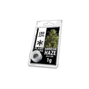 PLANT OF LIFE ΣΟΚΟΛΑΤΑ ΚΑΝΝΑΒΗΣ AMNESIA HAZE 22% CBD